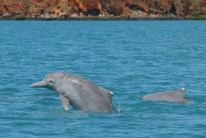 Rangers are getting to know our Kimberley Dolphins
