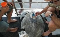 Keeping Tabs on Turtles
